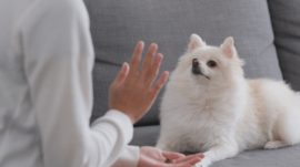 7 tips to train your dog